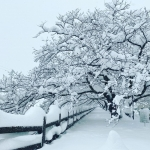 磯部堤・大雪